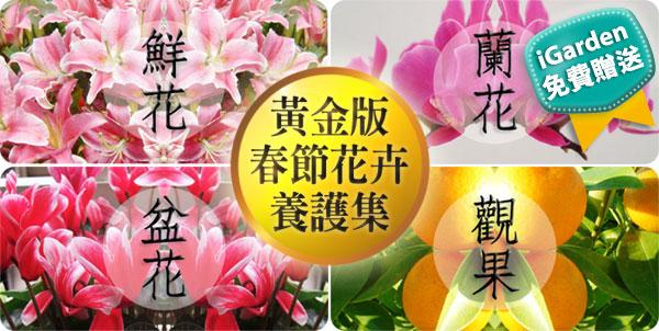 春節花卉選購及照顧指南