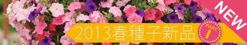 2013春季草花新品豋場
