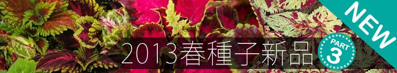 2013春播種子新品Part 3