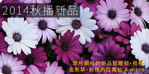 推薦新品首波草花種子開賣,明年春天值得期待喔 - 2014 年秋播專題
