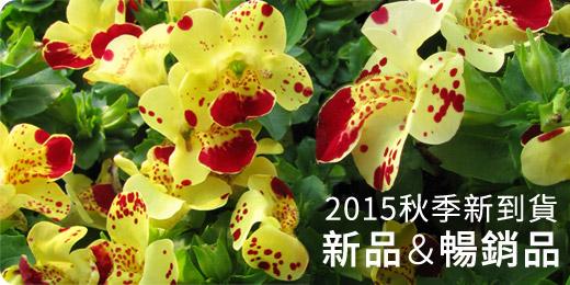 2015秋季新品+暢銷品新到貨-大岩桐皇后系列