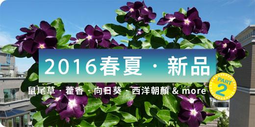 2016春夏 ‧ 新品Part2:鼠尾草、藿香、向日葵、西洋朝顏& more