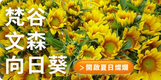 梵谷x文森x向日葵