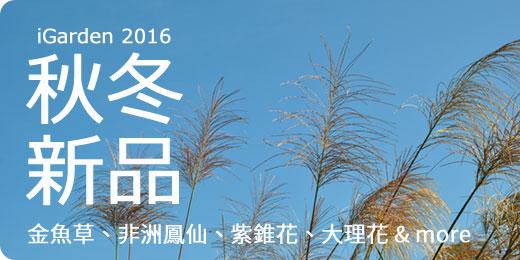 2016秋冬 ‧ 新品:大理花、石竹、紫錐花、金魚草&More